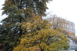 Старые деревья Александровского сада