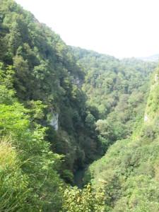 Вид на горное ущелье