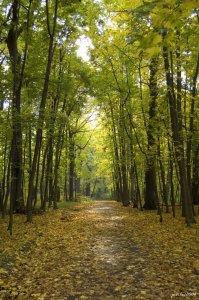 «Зеленая дорожка»- главная аллея парка [33]