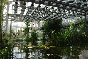 В оранжерее Ботанического сада[3]